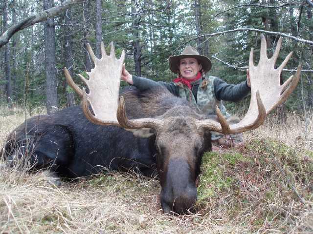 Trophy Moose Hunt