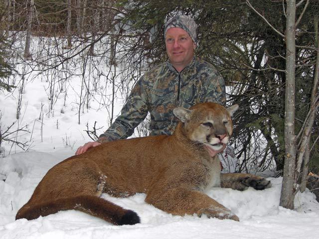 trophy cougar hunt
